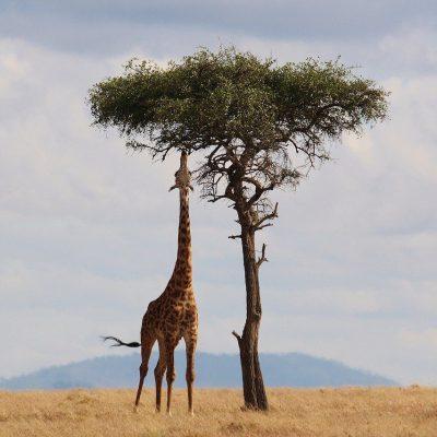 De vijf mooiste huwelijksreis bestemmingen in Afrika